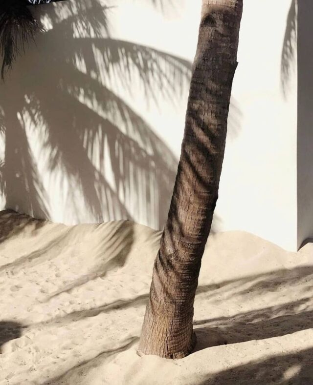 Inspo🤍 • • • • • • #inspo #aestheticlypleasing #postitforaesthetic #beigeaesthetic #minimalstyle  #neutrals #tenuedujour #neutralstyle #neutralshades #neutralpalette #neutrals #simpleandpure #simplebeyond #vintageaesthetic #beachvibes #tumblr #beach #summertime  #lovesea #beachtime #summermood #mybeigelife #parisiangirl #beigepalette