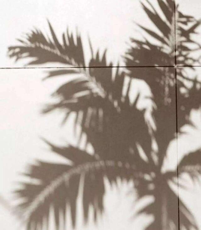 In the #shadow of🌴☀️ • • • • • • #aestheticlypleasing #postitforaesthetic #beigeaesthetic #minimalstyle #balticbeach #neutrals #tenuedujour #neutralstyle #neutralshades #neutralpalette #neutrals #simpleandpure #simplebeyond #vintageaesthetic #beachvibes #sea #tumblr #baltic #beach #summertime #girl #minimalism #lovesea #beachtime #summermood #picnic #mybeigelife #palmshadow #beigepalette